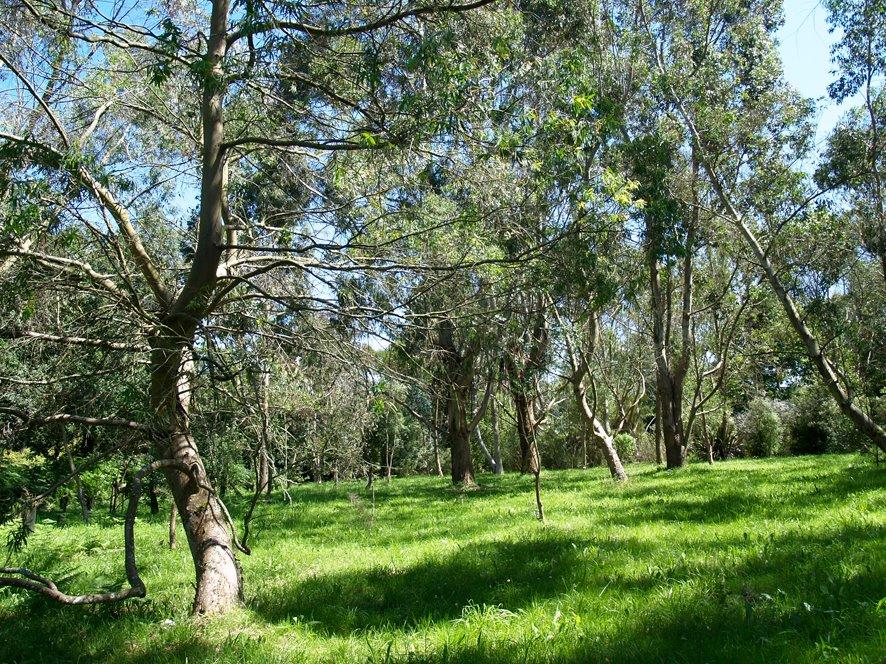 Arboretum du Huelgoat