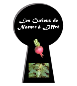logo-cdnaliffre