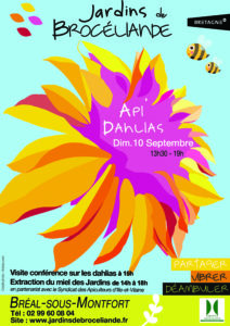 Affiche Dahlias