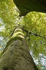 arbres01
