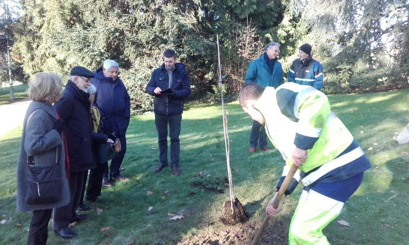 Un Pacanier au Thabor et à l'Université de Rennes Beaulieu, un arbre de paix