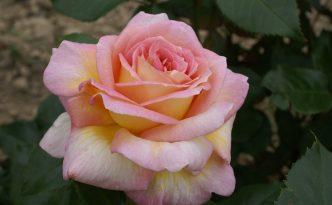 Rosières de France, adarosieref