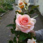 Rosières de France